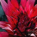 Bromeliad Splendor by Kat Solinsky