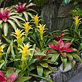 Bromeliads by Sally Weigand