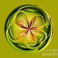 Bromiliad Orb by Darleen Stry