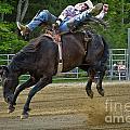 Bronco Cowboy by Gary Keesler