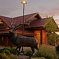 Bronze Elk At Taprock by Mick Anderson