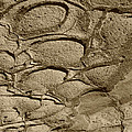 Bronze Mud Patterns 2 by Tom Daniel