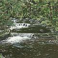 Brook In Spruceton by Lucinda V VanVleck
