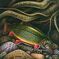 Brook Trout Lair by JQ Licensing