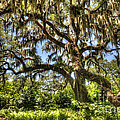 Brookgreen Gardens by Dale Powell