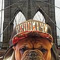 Brooklyn Dog by Dianne Ferrer