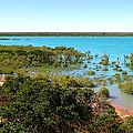 Broome Mangroves by Vickie Roy-Sneddon