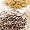 Brown And Golden Flax Seed by Elena Elisseeva