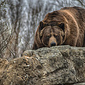 Brown Bear by Garett Gabriel