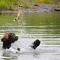 Brown Bear Playing With A Bone by Paul Fell