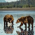 Brown Bear, Ursus Arctos, Walking by Bob Smith