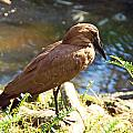 Brown Bird by Aimee L Maher ALM GALLERY