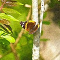 Brown Butterfly 2 by Nick Kirby