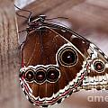 Brown Butterfly by Jeremy Hayden