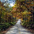 Brown County Lane by Libby Saunders