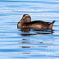 Brown Duck by Elizabeth Dow