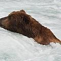Brown Grizzly Bear Swimming  by Patricia Twardzik