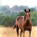 Brown Horse by Theresa A Diehl