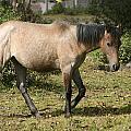 Brown Horse Walking Through A Pasture by Robert Hamm