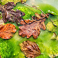 Brown Leaves In Green Pond by Matthias Hauser