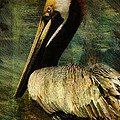 Brown Pelican Beauty by Deborah Benoit