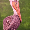Brown Pelican I by Barbara Samples