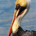 Brown Pelican In Morning Sun by Keith Lundquist