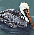 Brown Pelican On Water by Elaine Hodges