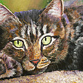 Brown Tabby Relaxing by Mary Jo Zorad