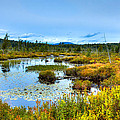 Browns Tract Inlet Waterway by David Patterson