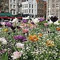 Brugge In Spring by Ausra Huntington nee Paulauskaite