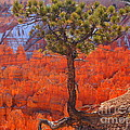 Bryce Canyon National Park Utah by Jennifer Craft