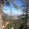 Bryce Canyon Overlook With Dead Trees by Christiane Schulze Art And Photography