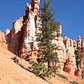 Bryce Canyon Red Fins by Christiane Schulze Art And Photography