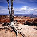 Bryce Canyon State Park by Richard Smukler