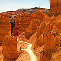 Bryce Canyon Trail by Jane Rix