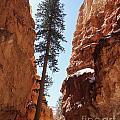 Bryce Canyon Wall Street by Derek Croucher