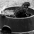Bubble Bath  by Steve Taylor