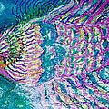 Bubble Fish II by Anne-Elizabeth Whiteway