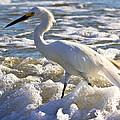 Bubbles Around Snowy Egret by Ed Gleichman