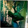 Buck A Deer by Jen  Brooks Art