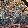 Buck And Fall Foliage by Lori Reynoso