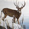 Buck At Waters Edge by Johanna Lerwick