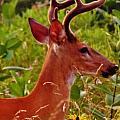 Buck by Greg Kear