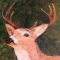 Buck Portrait by Nancy Crutcher