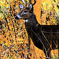 Buck Scouting For Doe by Lorna R Mills DBA  Lorna Rogers Photography