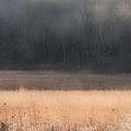 Buck Whitetail Deer Crossing Field by Dan Friend