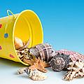 Bucket Of Seashells Still Life by Tom Mc Nemar