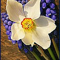 Buckeye And Grape Hyacinth by Chris Berry
