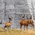 Bucks Abound by Deanna Cagle